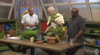 Re-Potting Houseplants & Summer Lawn Watering
