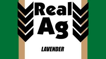 RealAg Lavender (Ep610)