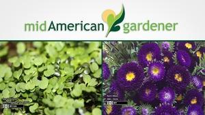 Mid-American Gardener with Sandy Mason February 22, 2018