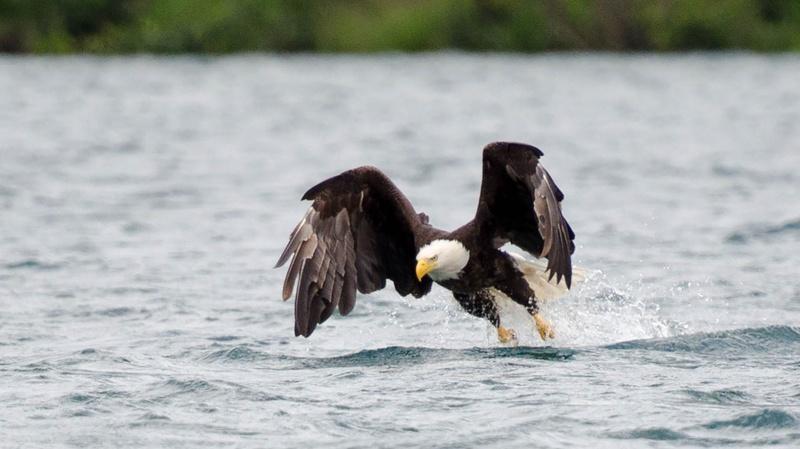Meet the Wildlife of Alaska