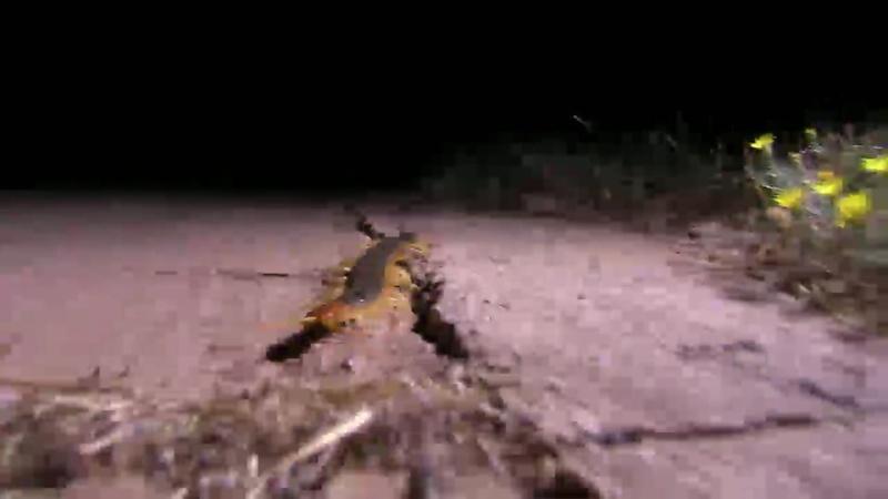 Texas Wild: Centipede