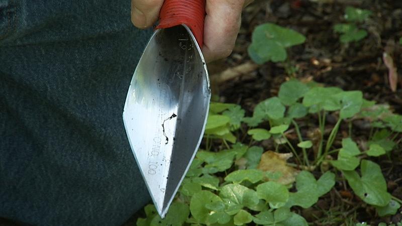Favorite Gardening Tools