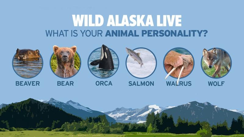 What's Your Wild Alaska Animal Personality?