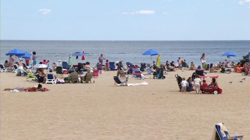 Should You Worry About Shark Attacks at the Jersey Shore?