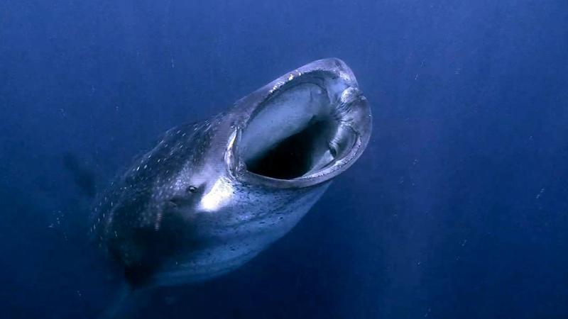 Biggest Fish in the Sea