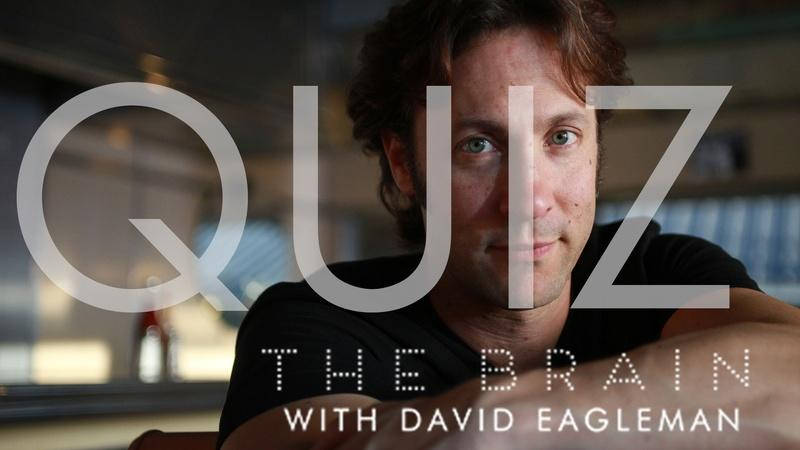 The Brain with David Eagleman | Episode 1 Quiz