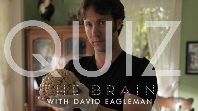 The Brain with David Eagleman | Episode 2 Quiz