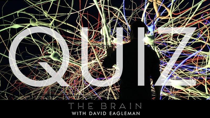 The Brain with David Eagleman | Quizzes on the Brain