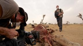 Image of Learn About India's Vulture Detectives