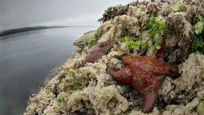 Image of Tour the Great Bear Rainforest