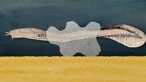 Image of Hagfish Slime Fashion