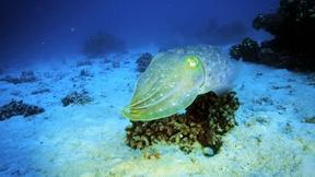 Image of Fish Hide and Seek