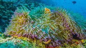 Image of A Timelapse of the Reef