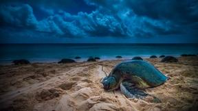 Image of Turtles on Raine Island