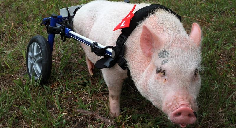 My Bionic Pet