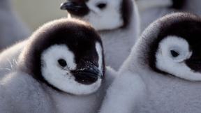 Image of Penguins: Spy in the Huddle | Episode 2 | First Steps