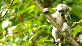 Image of Mischievous Monkeys Make Trouble
