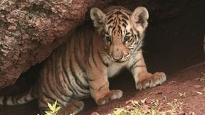 Image of Animal Childhood - Preview