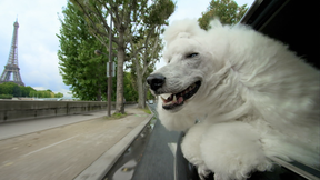 Image of PETS Wild at Heart | Episode 2 - Preview