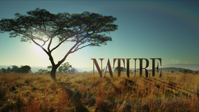 Image of NATURE's New Opening Sequence