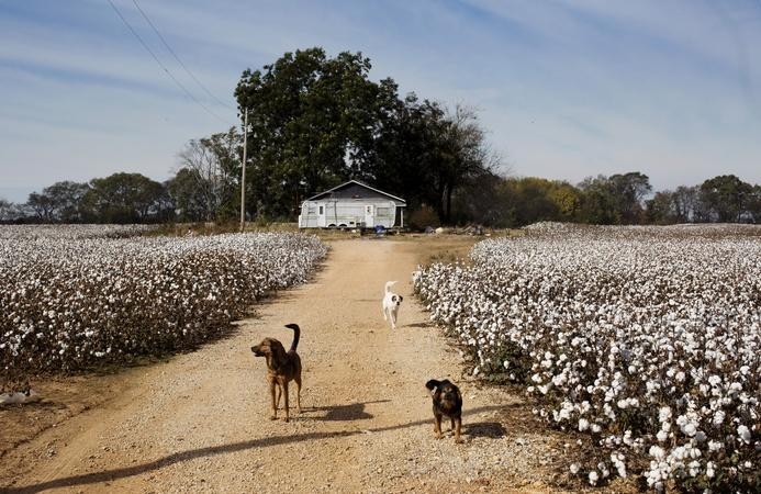 Poverty-stricken past and present in the Mississippi Delta