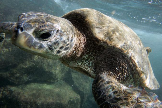 Obama to make marine preserve largest in the world