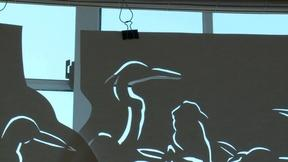 Image of Warning the public with cut-outs of 33 endangered birds