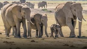 Image of Racing to save Kenya's wild elephants from poachers
