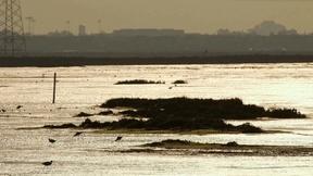 Image of Restored wetlands welcome wildlife around San Francisco Bay
