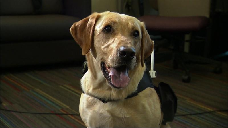 Translating canine communication with computer science