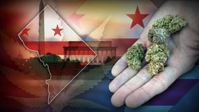 Image of D.C. makes pot legal, with restrictions