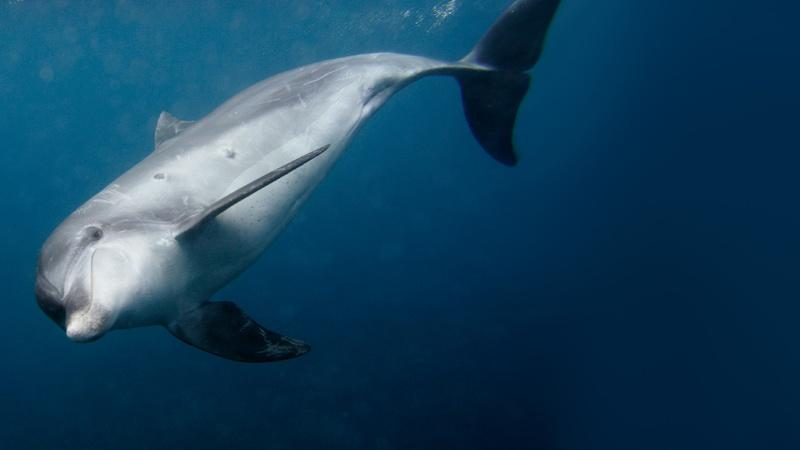 New science shows Gulf spill is still killing dolphins