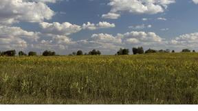 Image of A New Take on Fall Foliage: Prairie Grass
