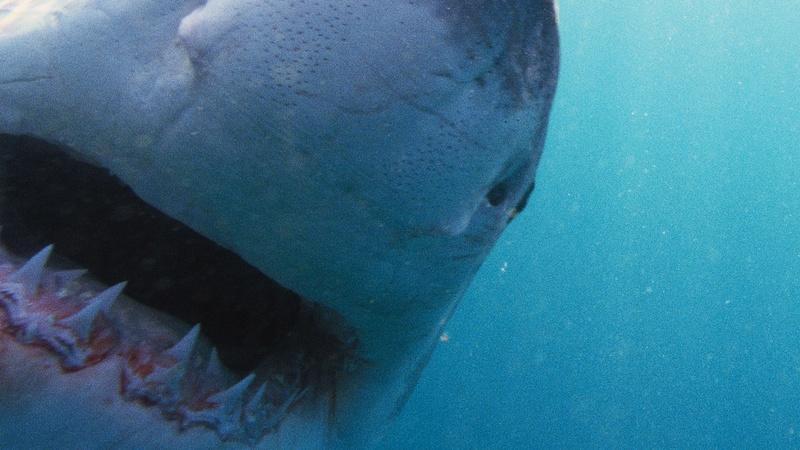 NOVA - Why Sharks Attack