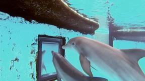 Image of Dolphin Mirror