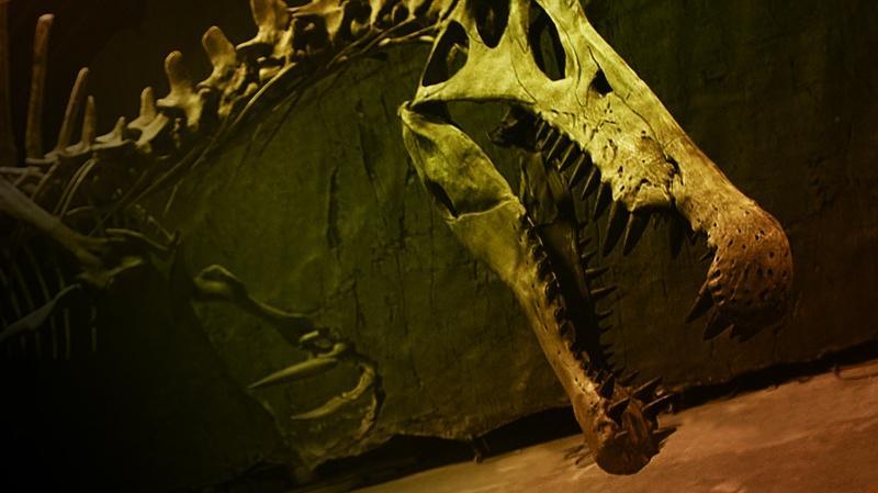 """NOVA – """"Bigger than T. Rex"""""""