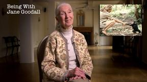 Image of Being with Jane Goodall