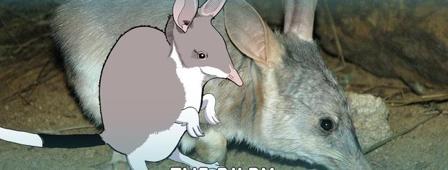 Image of The Easter Bilby