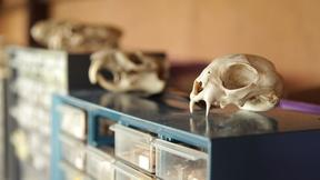 Image of Zooarchaeology