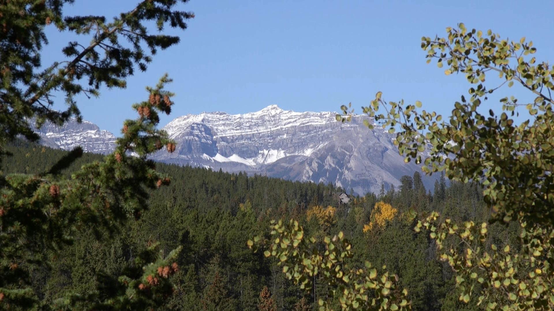 Jasper Wilderness