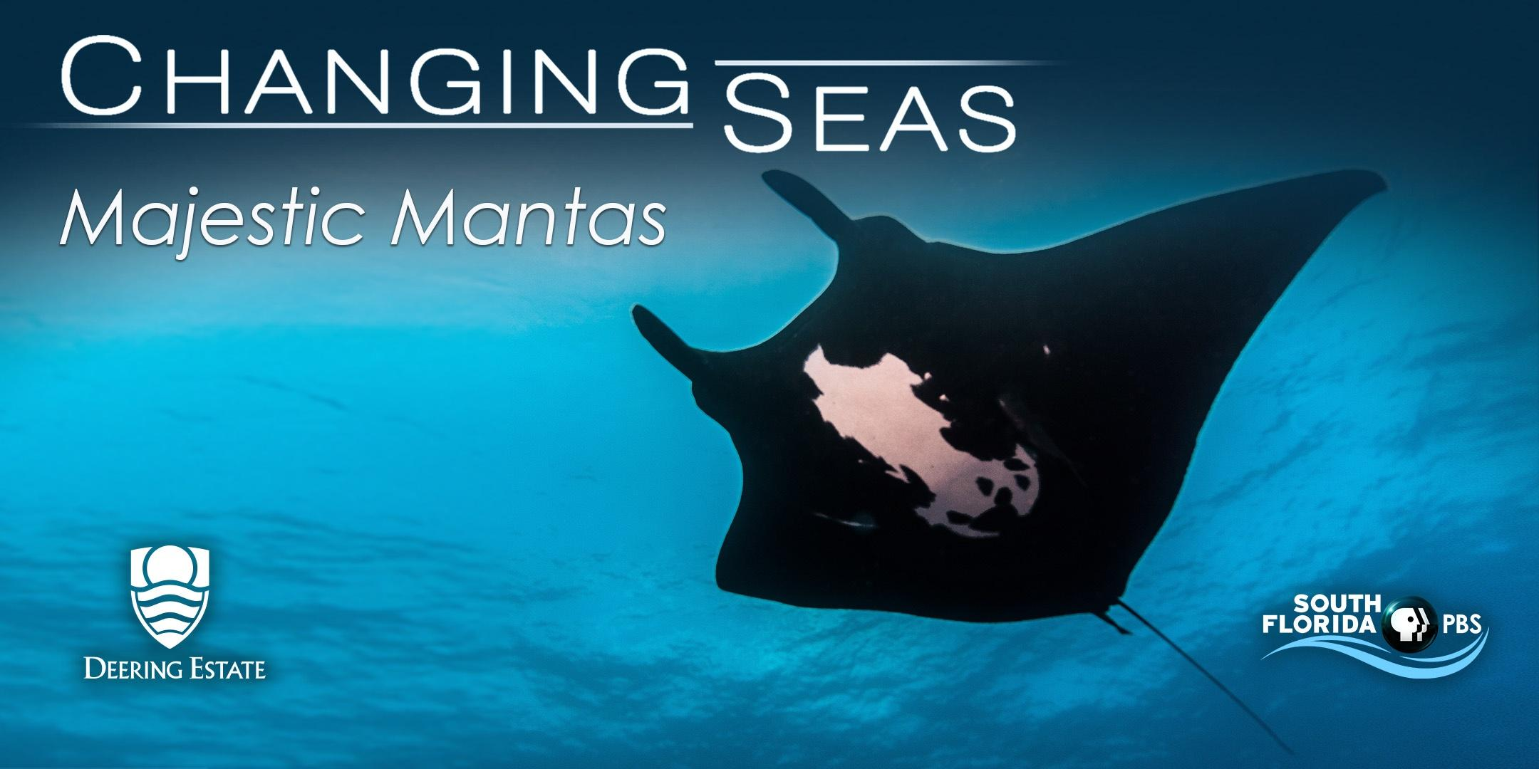 Screening: Majestic Mantas