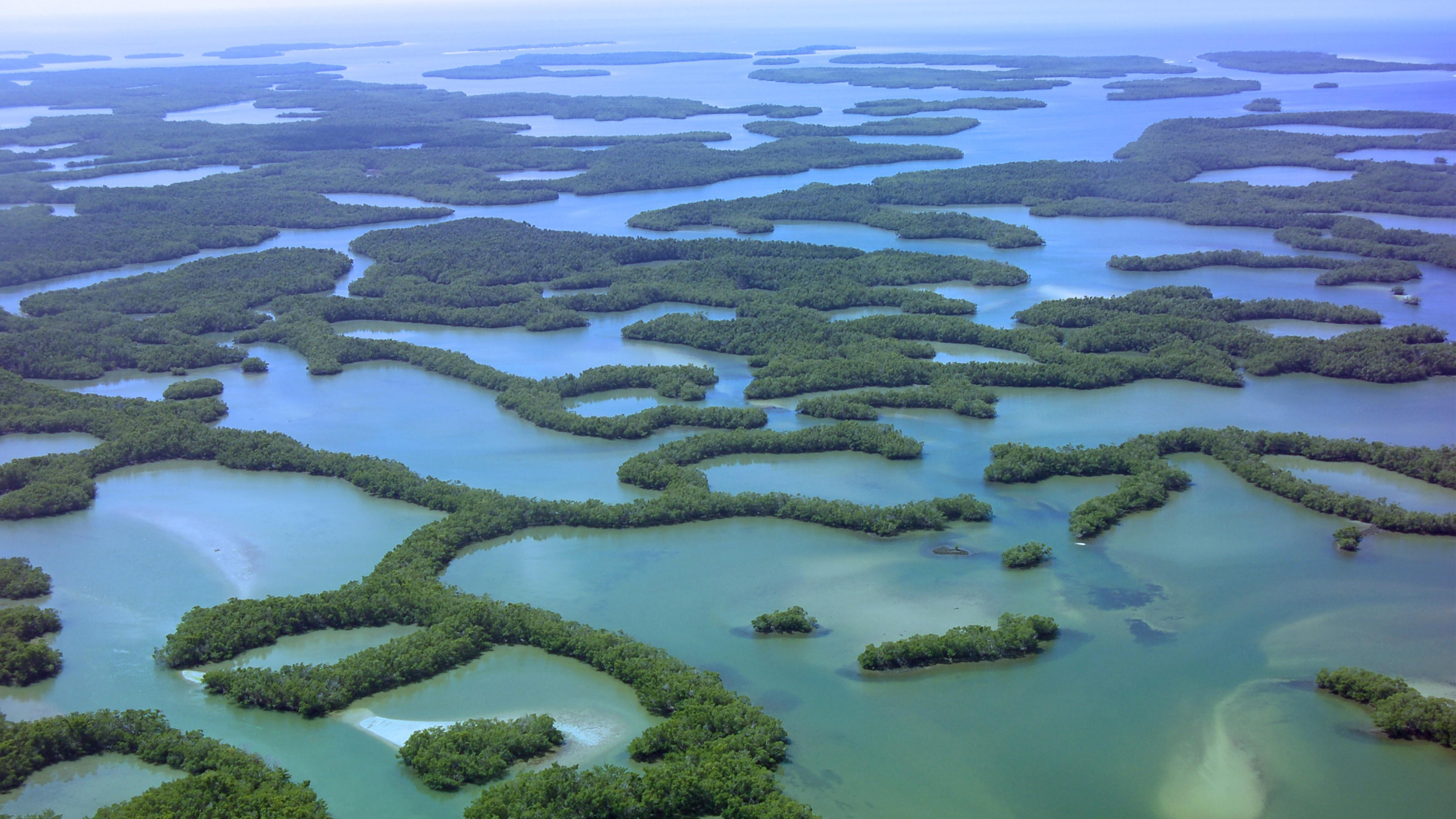 Seagrasses and Mangroves