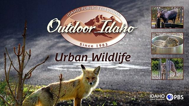 Outdoor Idaho Urban Wildlife Screening