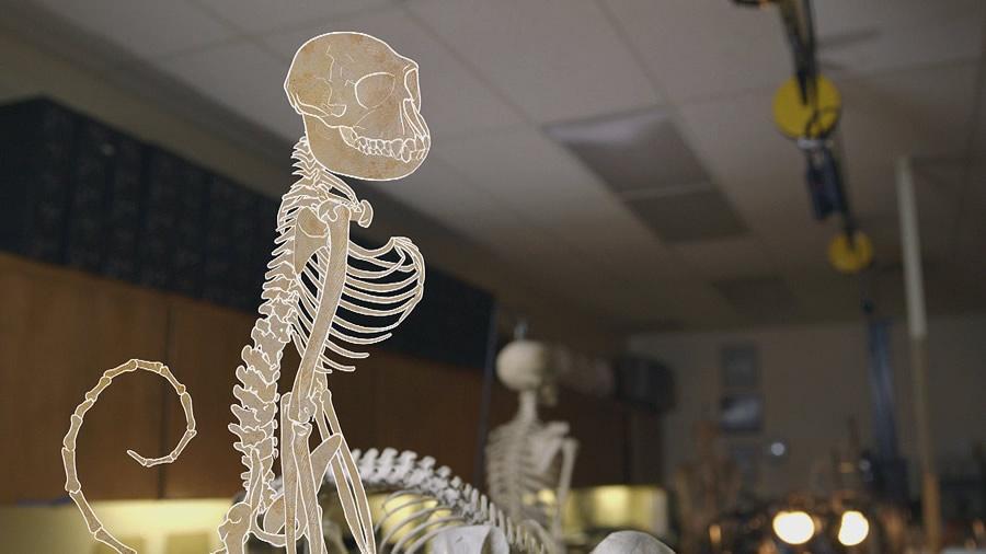 graphic representation of a skeleton