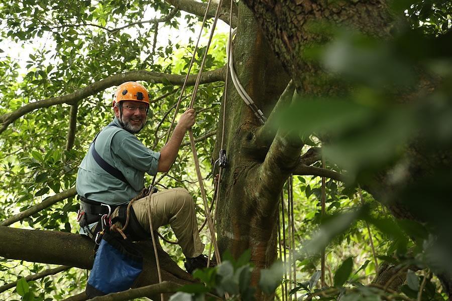 Neil Shubin climbing a tree with ropes