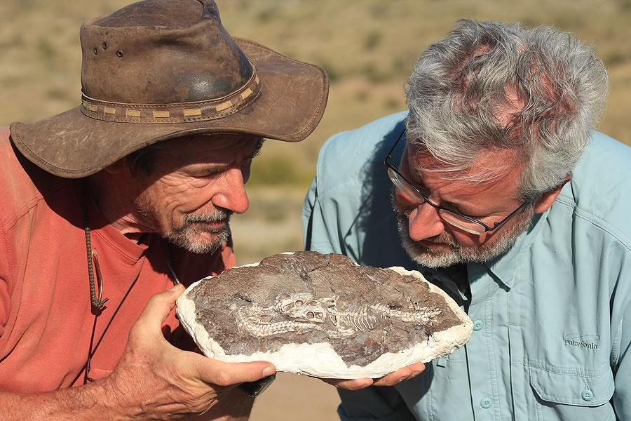 2 men looking closely at a fossil