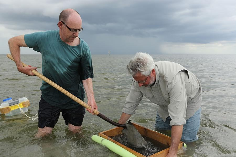 Neil Shubin holds a box over the water as Peter Holland shovels sand into it