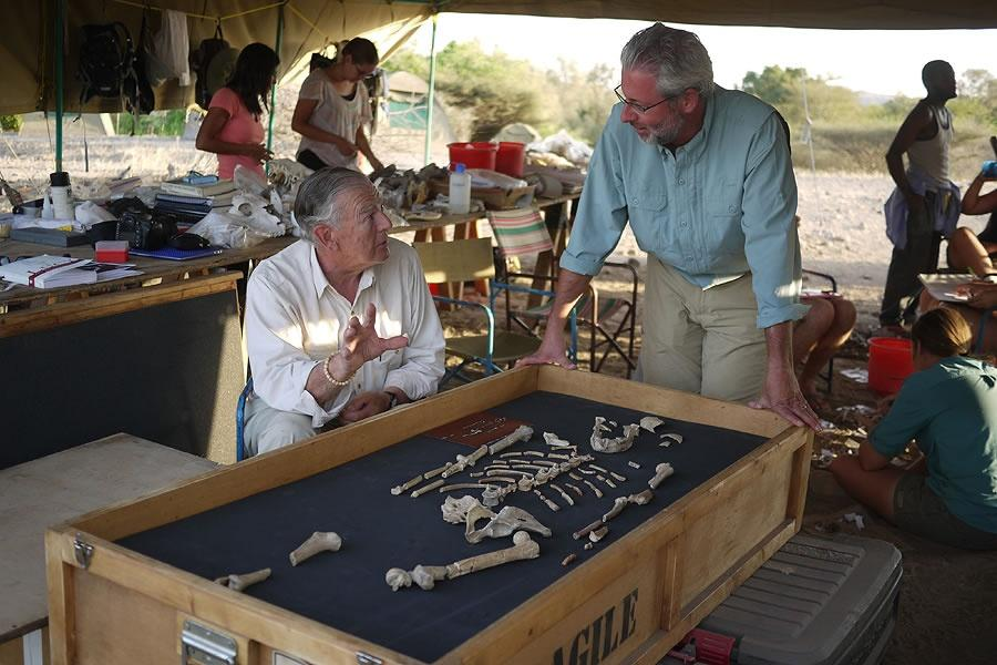 Don Johanson and Neil Shubin looking at partial skeleton layed out in a wood box