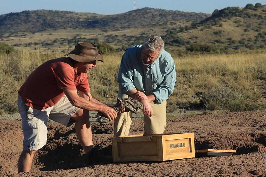 2 men kneeling on the ground looking at a gorgonopsid fossil