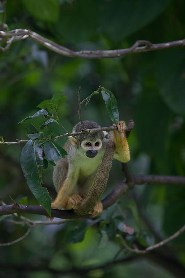 close-up of monkey on a tree branch